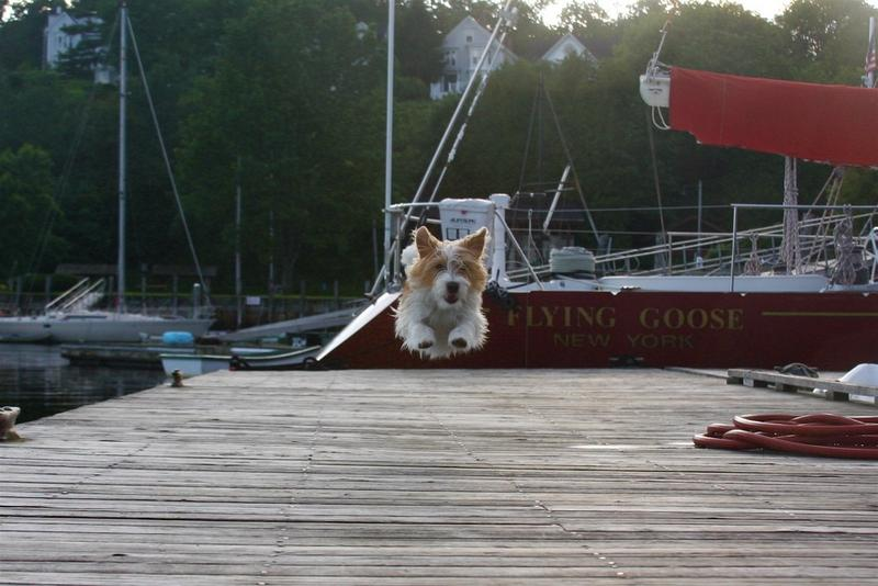 Sailing with a dog?-flying-goose-dog-3.jpg