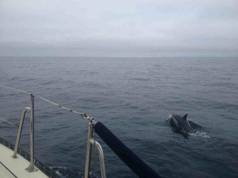 Headed to Catalina!-imageuploadedbytapatalk1374722761.986489.jpg