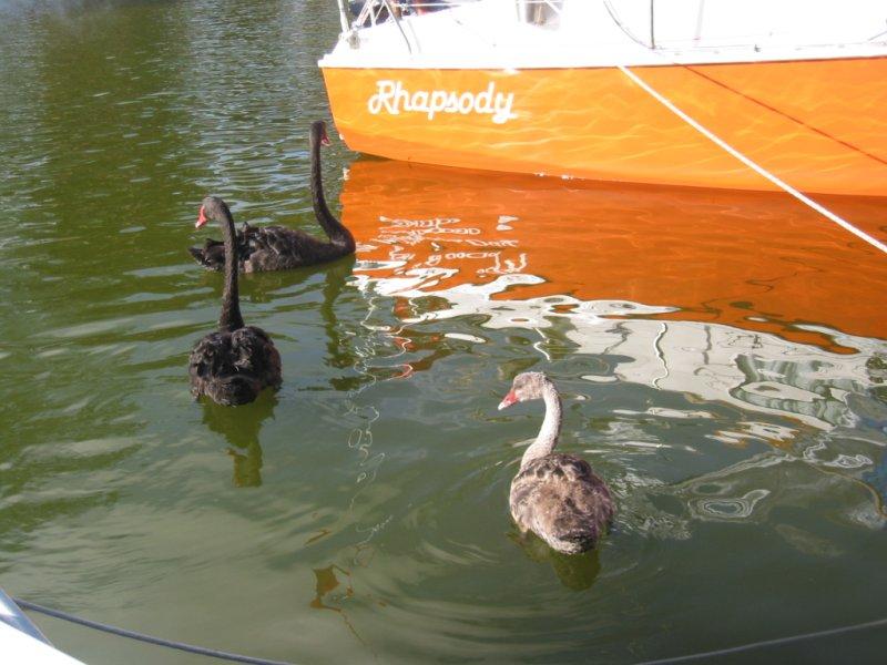 Gippsland Lakes-img_3357.jpg
